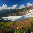 Mighty glacier in summer — Stock Photo