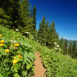 Stock Photo: Hiking trail in the mountains