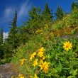 Stock Photo: Mountain Meadow