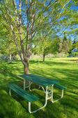 Verdant spring landscape — Stock Photo