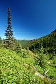 山の牧草地 — ストック写真