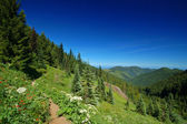 Hiking trail in the mountains — Stock Photo
