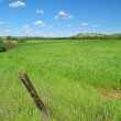 Rural spring countryside — Stock Photo #8862023