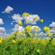 Rural spring meadow — Stock Photo