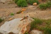 Streifenhörnchen — Stockfoto