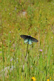 Butterfly in a meadow — Stock Photo