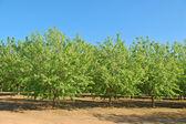 Springtime orchard — Stock Photo