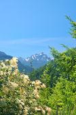 Berg i olympic national park — Stockfoto