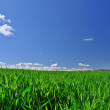 Field in springtime — Stock Photo
