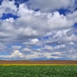 Field in springtime — Stock Photo #8890124