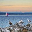 Seagulls and sailboat — Stock Photo