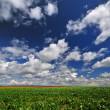 Field in springtime — Stock Photo #8891595