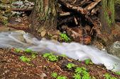 Wasserfall im wald — Stockfoto
