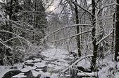 зимний поток — Стоковое фото