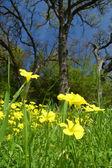 Springtime meadow — Стоковое фото