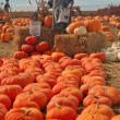 Stock Photo: Scarecrow in pumkin patch