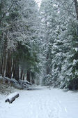 Snowy trail in the woods — Stock Photo