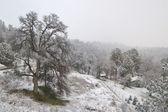 Campo cubierto de nieve — Foto de Stock