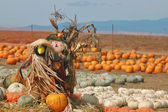 Strach na wróble w pumpkin patch — Zdjęcie stockowe