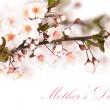 Cherry blossoms in a bloom — Stock Photo #10463742