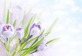 Spring tender flowers — Stock Photo