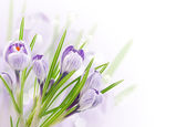 Spring tender flowers on white — Stock Photo