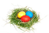 Easter eggs in a nestle — Stock Photo