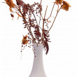 Royalty-Free Stock Photo: Bouquet of dry flowers in a vase isolated on white