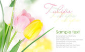 Three-colored tulips with copy space — Stock Photo