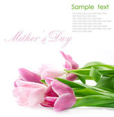 Tulip flowers postcard concept on white — Stock Photo