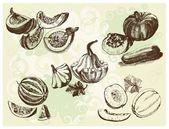 Melon crops — Stock Vector