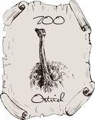 Ostrich — Stock Vector