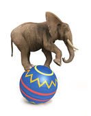 Elephant balance on ball — Stock Photo