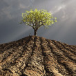 Lonely tree in the middle of plowed field - Stock Photo