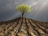 Lonely tree in the middle of plowed field — Stock Photo