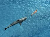 Haj dykare förföljer — Stockfoto
