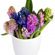 Stock Photo: Hyacinths upright in vase