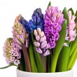 Hyacinths in vase across — Foto Stock