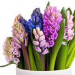 Hyacinths in vase across — Photo