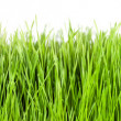 Stock Photo: Grass panorama