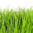 Grass panorama — Stock Photo #8812297