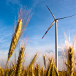 A wind turbine on the field — Lizenzfreies Foto