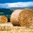 Bales of hay on meadow against the sky V1 — Zdjęcie stockowe