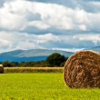 Bales of hay on meadow against the sky V3 — Stock fotografie