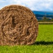 Bales of hay on meadow against the sky V5 — Foto de Stock