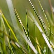 Grass Macro V1 — Stock Photo