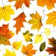 Many autumn leaves — Stock Photo #8818378