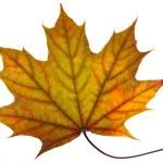 A leaf — Stock Photo