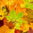 Lots of colorful autumn leaves background — Stockfoto