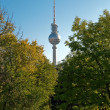 Berlin television tower between trees — Stock Photo